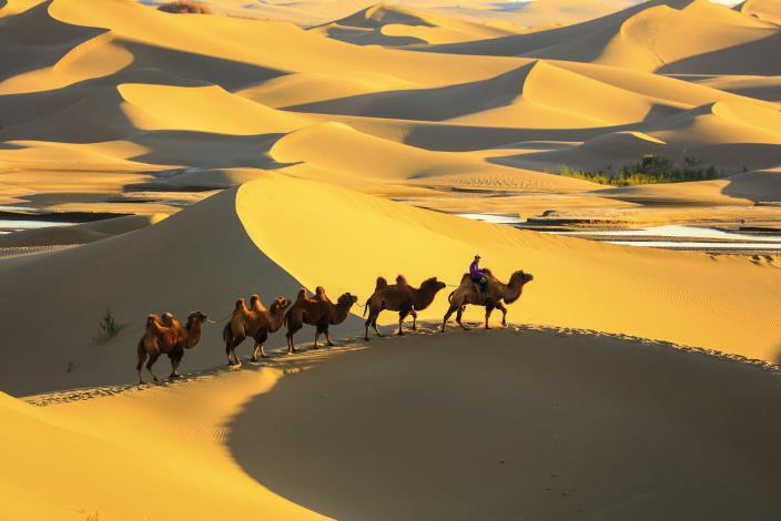 連哲宗-沙漠之舟_圖示